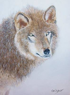 Painting - Canada Grey Wolf. by Jean Yves Crispo