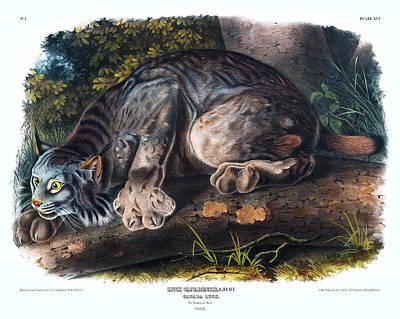 Bobcat Art Drawing - Canada Lynx Antique Print Audubon Quadrupeds Of North America Plate 16 by Orchard Arts