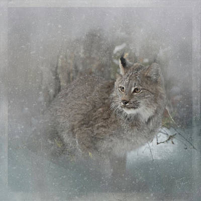 Photograph - Canada Lynx Painted by Teresa Wilson
