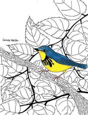 Warbler Mixed Media - Canada Warbler by Sarah Rupert