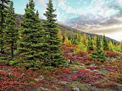 Photograph - Canadian Autumn by Anthony Dezenzio