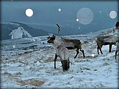 Natural Habitat Wall Art - Digital Art - Canadian Elk By Moonlight by Raven Hannah