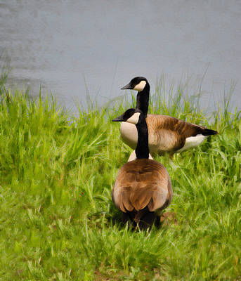 Photograph - Canadian Geese At Loch Mary - Earlington Kentucky - 2a by Greg Jackson