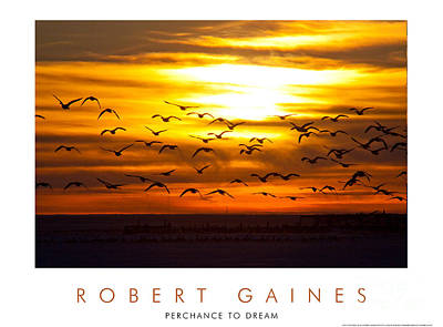 Photograph - Canadian Geese At Sunset 1 by Robert Gaines