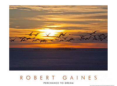 Photograph - canadian Geese at Sunset 2 by Robert Gaines