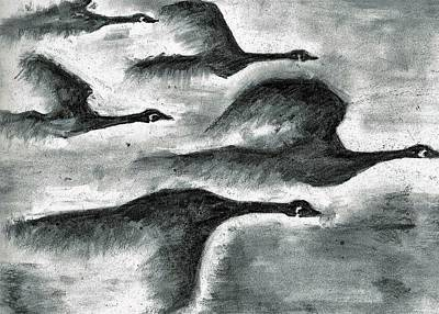 Canadian Geese Drawing - Canadian Geese by Begelfor Janet