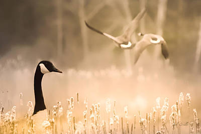 Photograph - Canadian Geese by Bob Orsillo