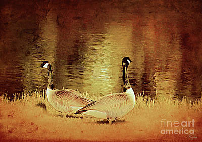 Canadian Geese Mixed Media - Canadian Geese by KaFra Art