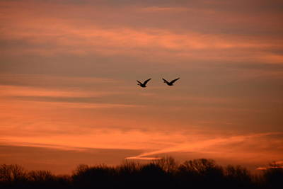 Photograph - Canadian Geese Morning Flight by Randy J Heath