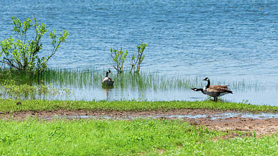Photograph - Canadian Geese - Wichita Mountains - Oklahoma by Debra Martz