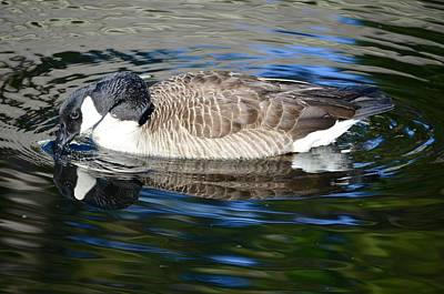 Photograph - Canadian Goose Reflecting In Calm Waters by Richard Bryce and Family