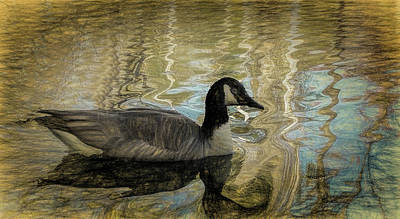 Carolina Duck Painting - Canadian Goose by Steven Richardson