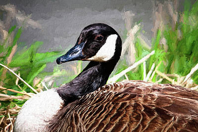 Goose Photograph - Canadian Goose by Tom Mc Nemar