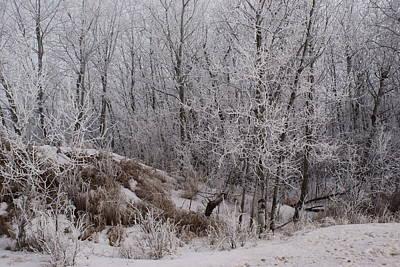 Photograph - Canadian Ice Fog  by Joanne Smoley