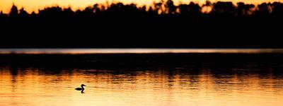 Canadian Loon Sunset 2 Art Print by Ian MacDonald