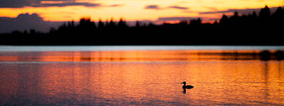 Canadian Loon Sunset 1 Art Print by Ian MacDonald