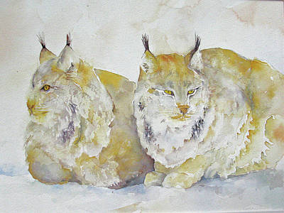 Canadian Lynx Original