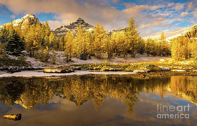 Photograph - Canadian Rockies Golden Larches Reflection by Mike Reid