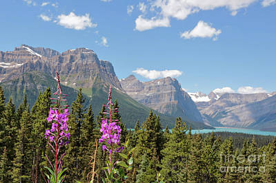 Photograph - Canadian Rocky Mountains With Pink Wildflowers  by Carol Groenen