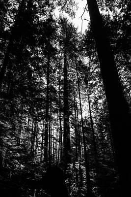 Photograph - Canadian Tree Silhouette by Perggals - Stacey Turner