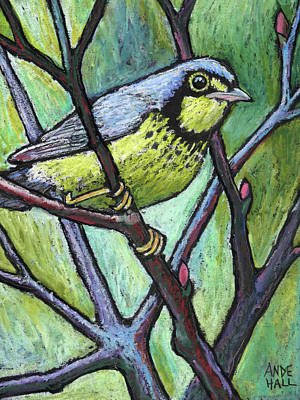 Warbler Painting - Canadian Warbler by Ande Hall