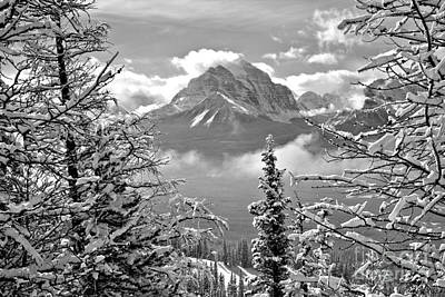 Photograph - Canadian Rockies Through The Snow Covered Trees Black And White by Adam Jewell