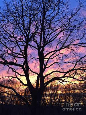 Photograph - Canal  Winter Sunset  Pt by Christopher Plummer