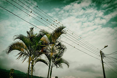 Firefighter Patents - Canaries on a wire I by Michael Evans