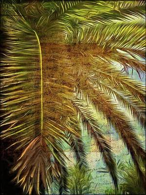 Photograph - Canary Palm Whispers by Alice Gipson