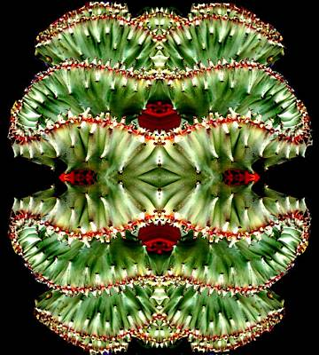 Photograph - Cancan Cactus by Marianne Dow