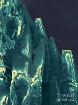 Platinum Photograph - Cancer Research With Nanotechnology, Sem by Science Source