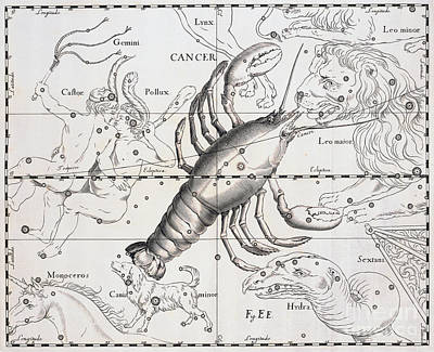 Shell Sign Drawing - Cancer, The Zodiacal Constellation Of The Crab by Johann Hevelius