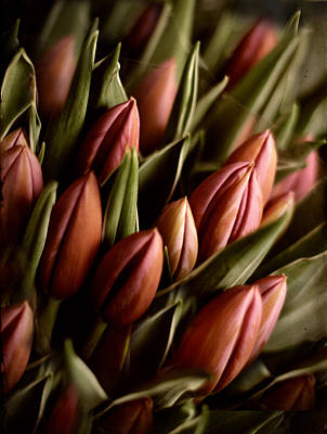 Tulips Digital Art - Candlelight  by Jessica Jenney