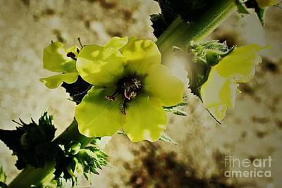 Photograph - Candlewick Plant by Jenny Revitz Soper