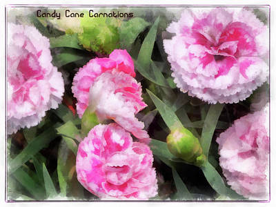 Digital Art - Candy Cane Carnations by Leslie Montgomery