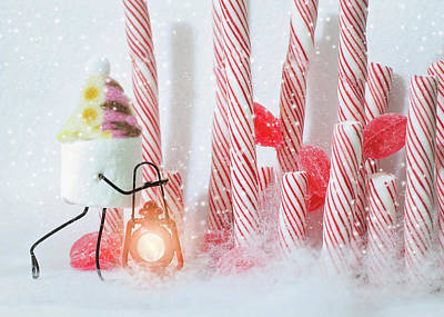 Photograph - Candy Cane Forest by Heather Applegate