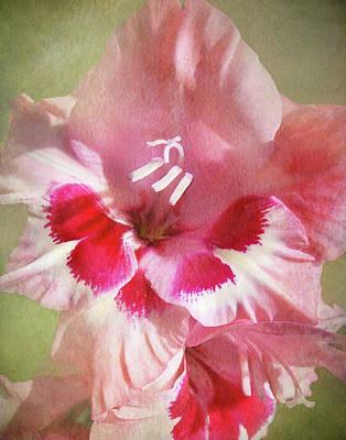 Candy Cane Gladiola Art Print