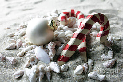 Photograph - Candy Canes And Sea Shells by Mary Haber