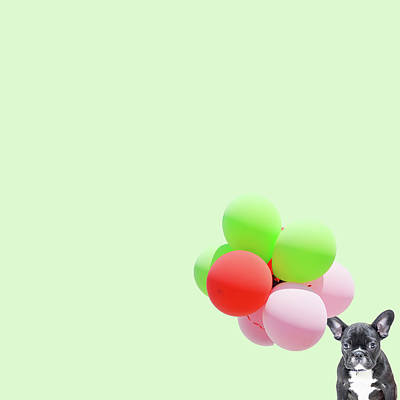 Minimal Wall Art - Photograph - Candy Dog by Caterina Theoharidou