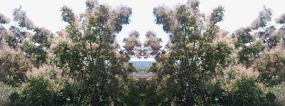 Photograph - Candy Floss Greek Bush by Julia Woodman