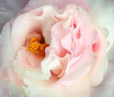 Camellia Photograph - Candy Mint Camellia by Kathryn Stivers