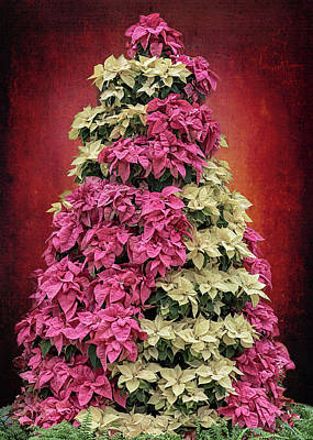 Photograph - Candy Striped Poinsettia Tree   by Susan Rissi Tregoning