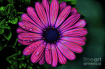 Photograph - Candy Stripes by Diana Mary Sharpton