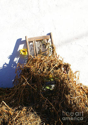 Photograph - Cane Back Chair And Sunflower by Annlynn Ward