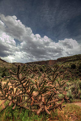 Photograph - Cane Cholla Cactus by Steve Gravano