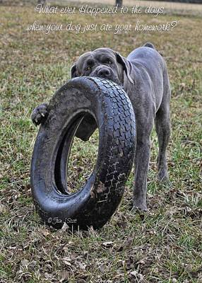 Photograph - Cane Corso Italian Mastiff by Fran J Scott