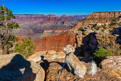 Photograph - Canine Canyon Contemplation by John M Bailey