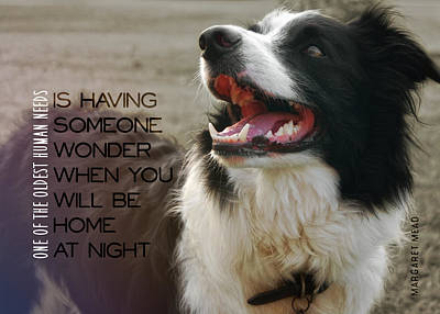 Canine Grin Quote Art Print by JAMART Photography