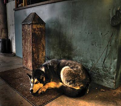 Canine Sentry Art Print
