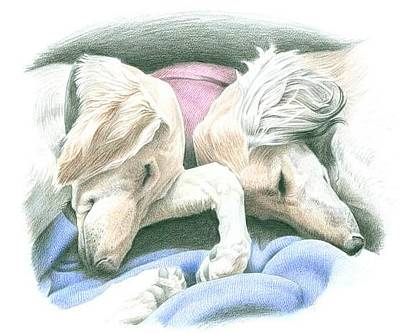 Dachsund Drawing - Canine Serenity by John Senior